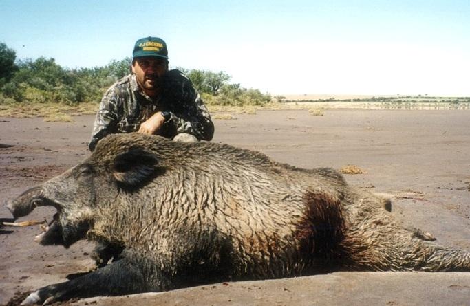 wild boar3