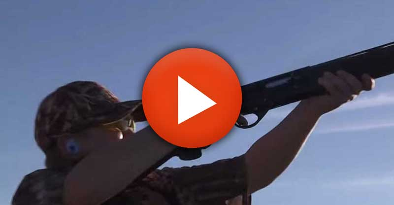 Amazing dove hunting in Argentina record 11 years old