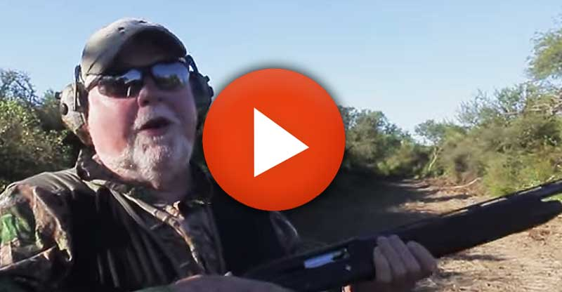 Dove hunting testimonies